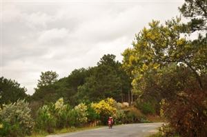 Cải tạo đường qua đèo Mimosa - Đà Lạt